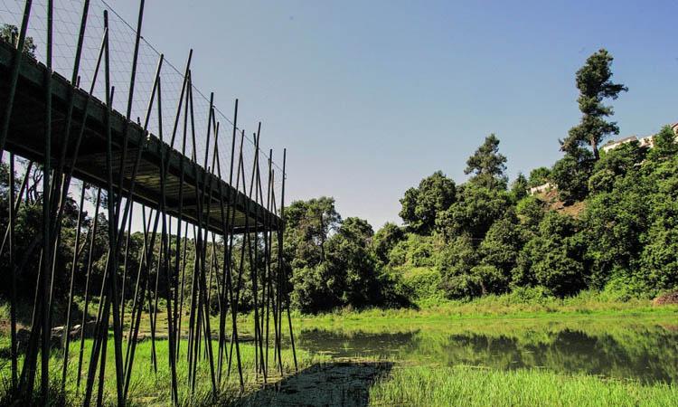 Retrobar-se amb la natura: gaudeix del pantà de Vallvidrera