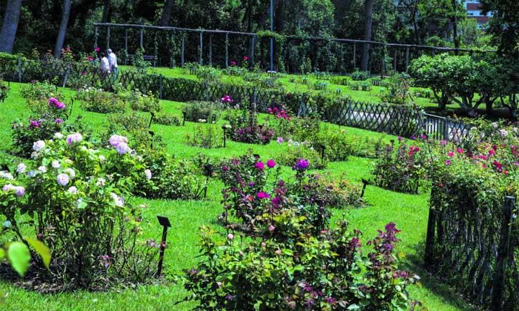 Parc de Cervantes: l'esclat de les roses