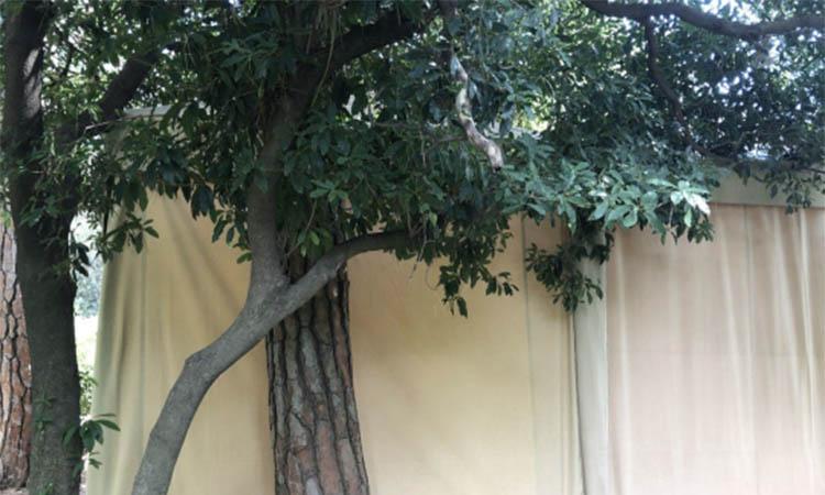 Denuncien destrosses als Jardins de Pedralbes pel muntatge del festival de música