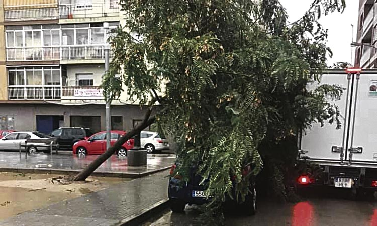 El temporal deixa un rastre d'arbres caiguts al Prat