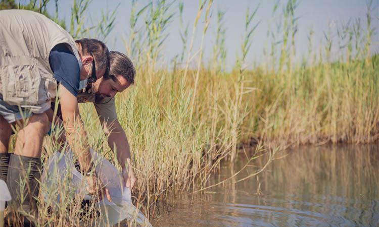 El Zoo allibera peixos en perill d'extinció al Delta