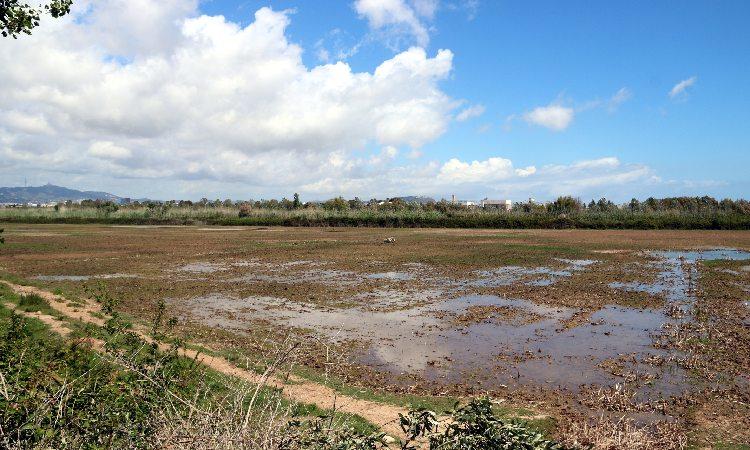 Font i Freixa es comprometen a protegir els terrenys que el Barça té a Viladecans