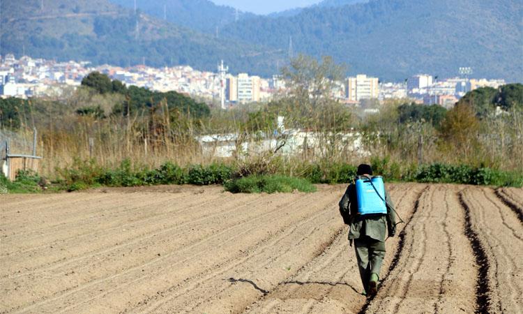Els pagesos de Gavà i Viladecans diuen que corren perill si s'amplia l'àrea protegida al Delta