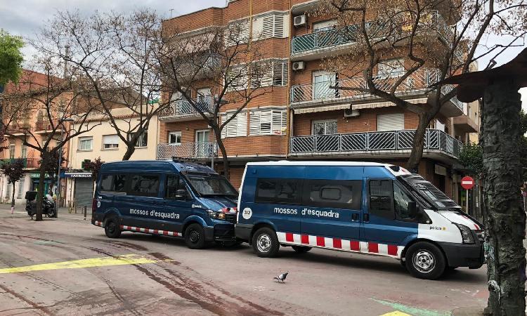 Un detingut en l'operació contra plantacions de marihuana a Sant Roc i Artigues