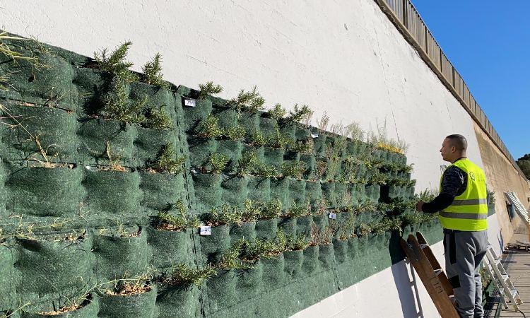 Un jardí vertical per combatre el canvi climàtic al parc fluvial del Besòs