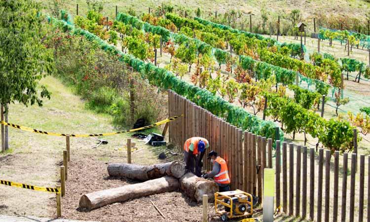 L'AMB construeix una trentena de refugis de biodiversitats amb els arbres caiguts del temporal Glòria