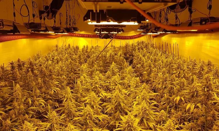 Cau un clan que extorquia i feia fora veïns de Sant Roc per plantar marihuana