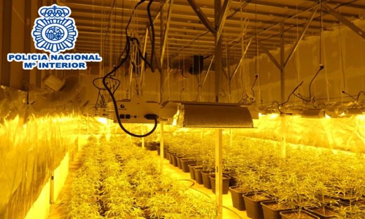 Desmantellen una plantació de marihuana a una nau d'Olesa