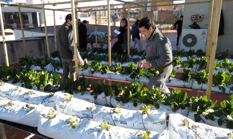 L'hort del terrat del Districte va generar l'any passat 973 quilos d'hortalisses