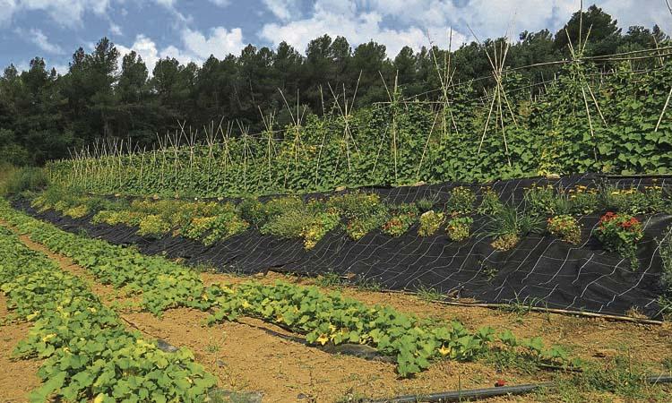 Convertir Collserola en una zona de producció agrícola