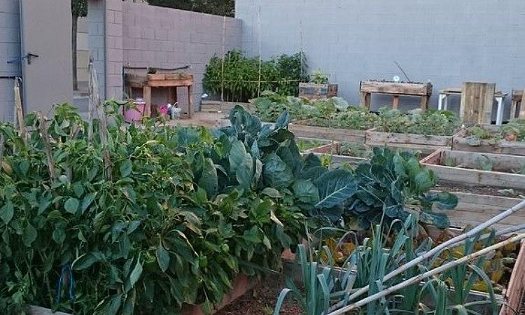 Neix a Barberà un Pla Local d'Horta per una alimentació saludable