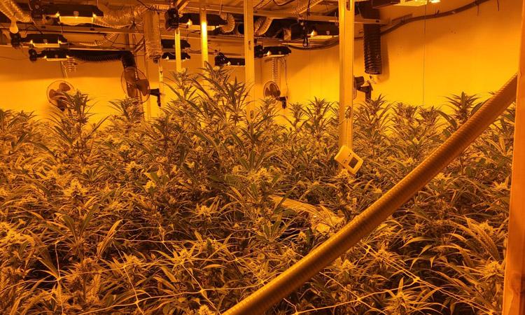 Detinguts dos llagostencs per cultivar marihuana
