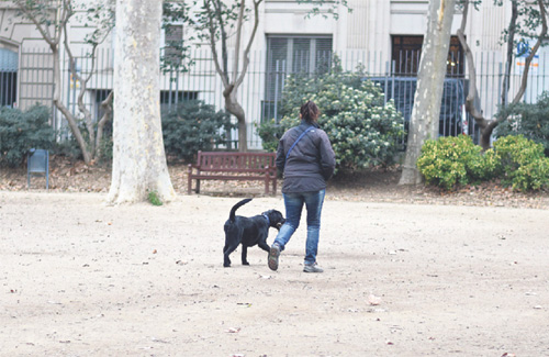 El Turó Park serà un espai sense gossos. Foto: Cristian López