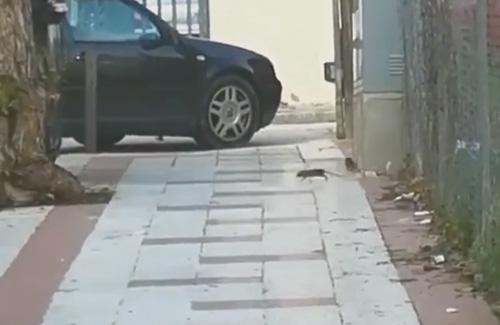 La brutícia d'un terreny abandonat atrau les rates al barri. Foto: Ocata Activa