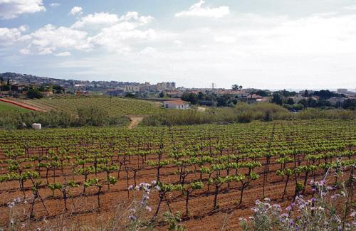 La ruta del vi DO Alella promou la Jornada Enosolidària. Foto: Arxiu